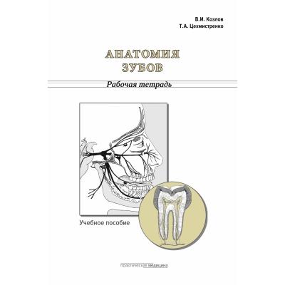 Анатомия зубов. Рабочая тетрадь