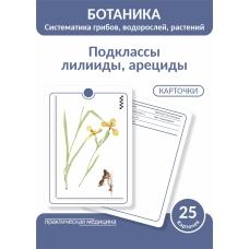 Ботаника. Систематика грибов, водорослей, растений. Подклассы лилииды, арециды.КАРТОЧКИ (25 шт).
