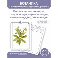 Ботаника. Систематика грибов, водорослей, растений. Подклассы магнолииды, ранункулиды, кариофиллиды, гамамелидиды, дилленииды. КАРТОЧКИ (44 шт).