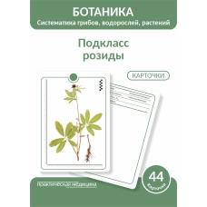 Ботаника. Систематика грибов, водорослей, растений. Подкласс розиды. КАРТОЧКИ (44 шт).